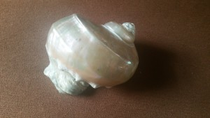 Shell used as a prop by Wendy Shearer Storytelling in London